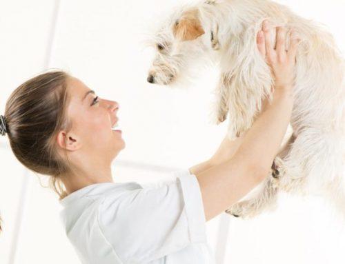 A Pet-Friendly Move